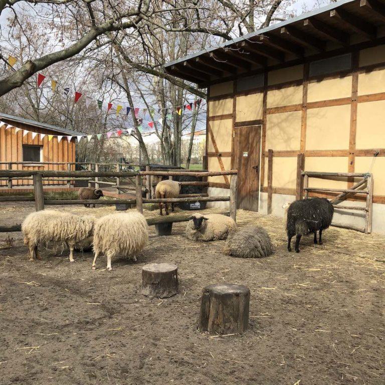 Kinderbauernhof im Görlitzer Park